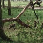 Namibia - Wildlife 1