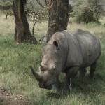 Namibia - Wildlife 2