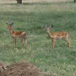 Namibia - Wildlife 3
